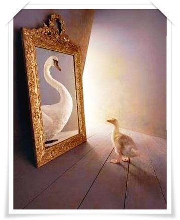pato-cisne